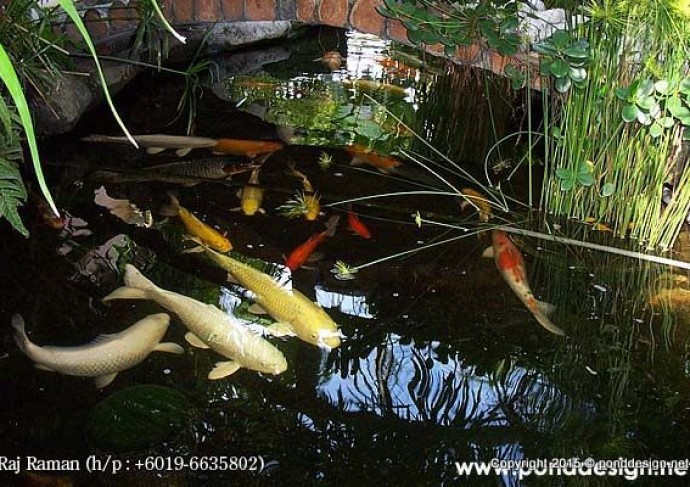 Fish pond construction and filtration malaysia fountain for Koi fish pond design in malaysia