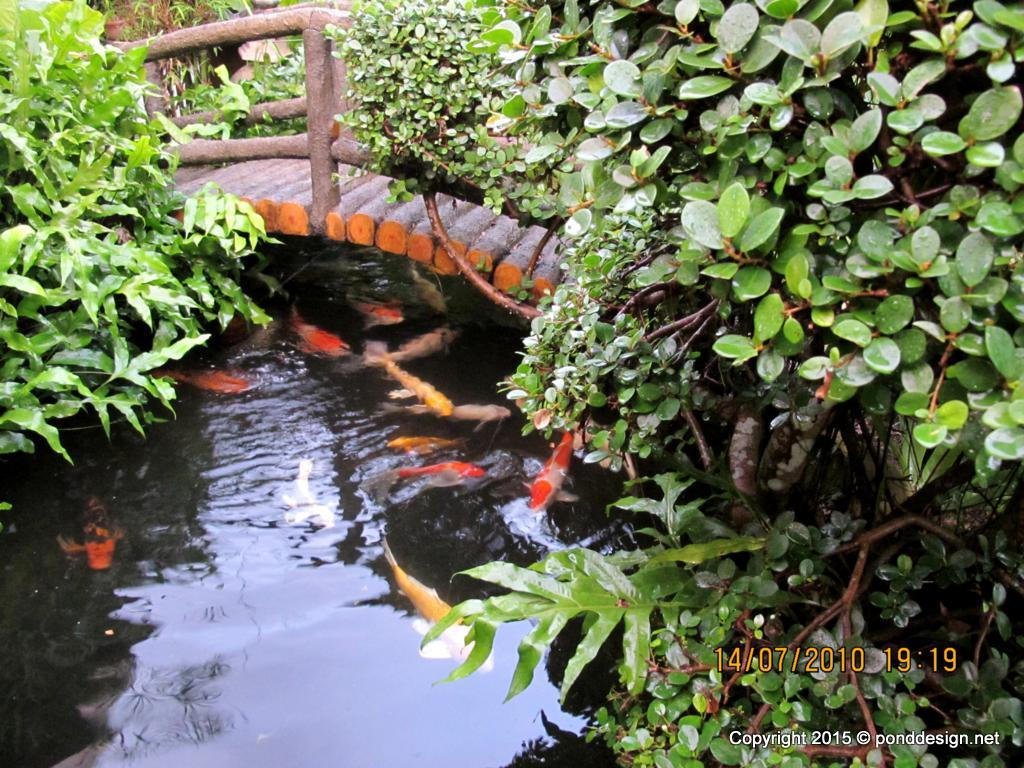 Fish pond design and construction in malaysia fish pond for Koi pond pics