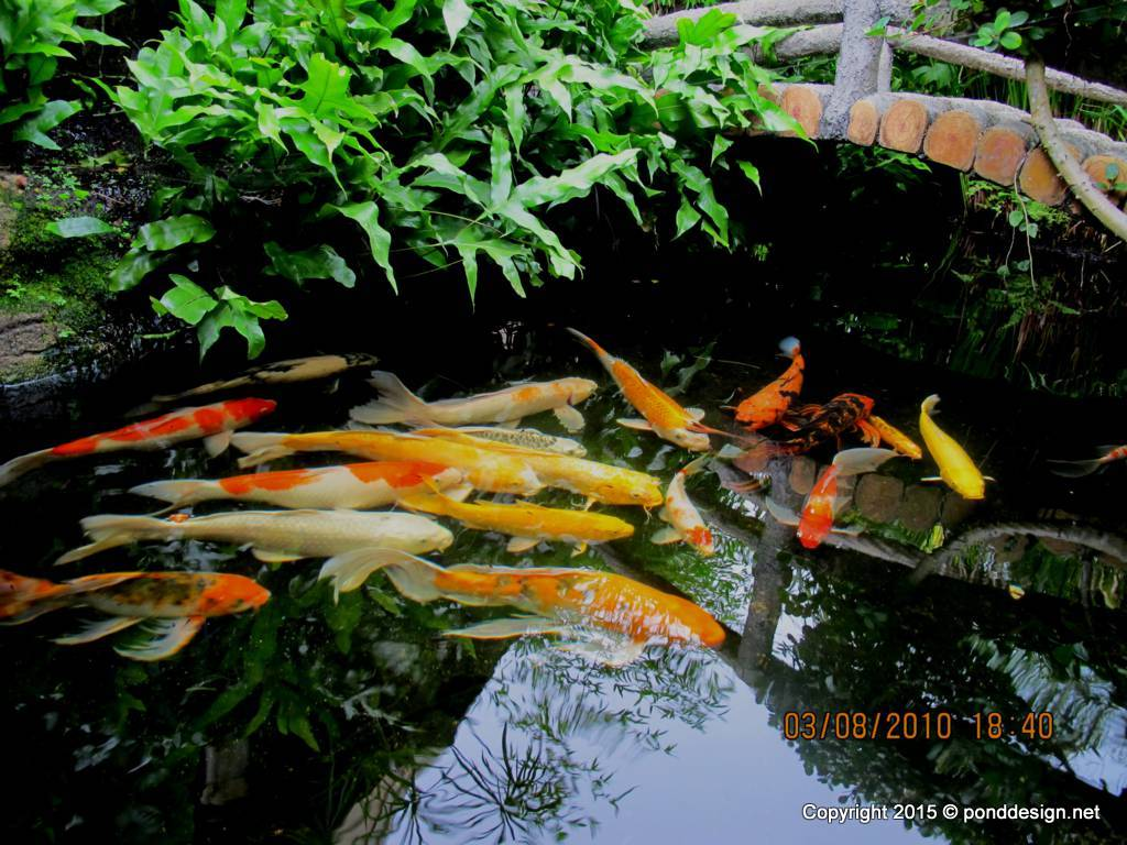 Fish pond design fountain design trading for Koi pond in house