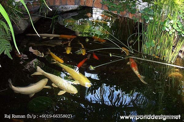Fish pond construction and filtration malaysia fountain for Koi pond design malaysia
