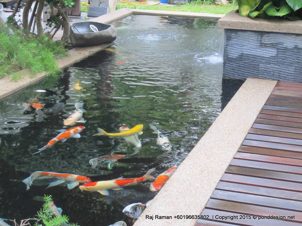 Koi pond design malaysia fountain design trading for Simple koi pond